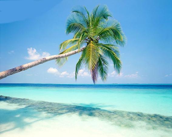 some-beach-coconut-tree